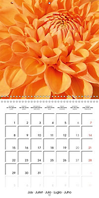 Colors of Dahlias (Wall Calendar 2019 300 × 300 mm Square) - Produktdetailbild 7
