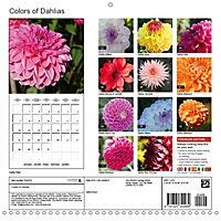 Colors of Dahlias (Wall Calendar 2019 300 × 300 mm Square) - Produktdetailbild 13