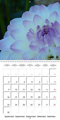 Colors of Dahlias (Wall Calendar 2019 300 × 300 mm Square) - Produktdetailbild 9