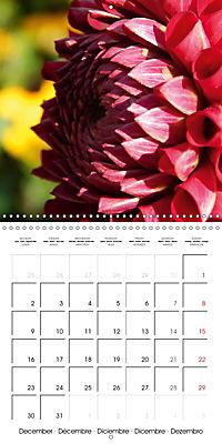 Colors of Dahlias (Wall Calendar 2019 300 × 300 mm Square) - Produktdetailbild 12