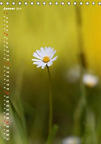 Colors of Nature (Tischkalender 2019 DIN A5 hoch) - Produktdetailbild 1