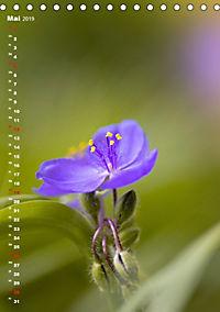 Colors of Nature (Tischkalender 2019 DIN A5 hoch) - Produktdetailbild 5