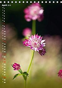 Colors of Nature (Tischkalender 2019 DIN A5 hoch) - Produktdetailbild 4