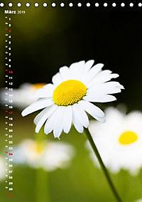 Colors of Nature (Tischkalender 2019 DIN A5 hoch) - Produktdetailbild 3