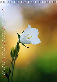 Colors of Nature (Tischkalender 2019 DIN A5 hoch) - Produktdetailbild 6