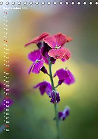 Colors of Nature (Tischkalender 2019 DIN A5 hoch) - Produktdetailbild 9