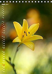 Colors of Nature (Tischkalender 2019 DIN A5 hoch) - Produktdetailbild 7