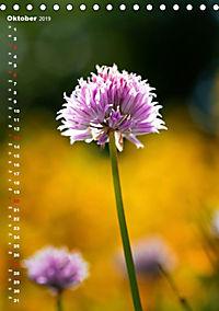 Colors of Nature (Tischkalender 2019 DIN A5 hoch) - Produktdetailbild 10