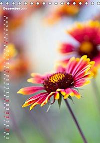 Colors of Nature (Tischkalender 2019 DIN A5 hoch) - Produktdetailbild 12