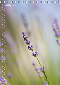 Colors of Nature (Tischkalender 2019 DIN A5 hoch) - Produktdetailbild 11