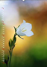 Colors of Nature (Wandkalender 2019 DIN A2 hoch) - Produktdetailbild 6