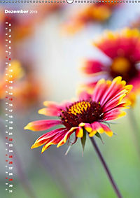 Colors of Nature (Wandkalender 2019 DIN A2 hoch) - Produktdetailbild 12