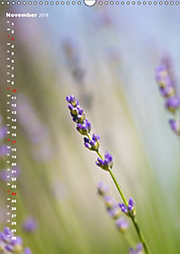 Colors of Nature (Wandkalender 2019 DIN A3 hoch) - Produktdetailbild 11