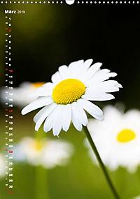 Colors of Nature (Wandkalender 2019 DIN A3 hoch) - Produktdetailbild 3