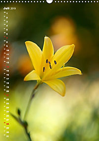 Colors of Nature (Wandkalender 2019 DIN A3 hoch) - Produktdetailbild 7