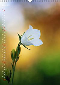 Colors of Nature (Wandkalender 2019 DIN A3 hoch) - Produktdetailbild 6