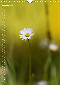 Colors of Nature (Wandkalender 2019 DIN A4 hoch) - Produktdetailbild 1