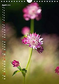 Colors of Nature (Wandkalender 2019 DIN A4 hoch) - Produktdetailbild 4