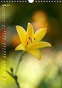 Colors of Nature (Wandkalender 2019 DIN A4 hoch) - Produktdetailbild 7