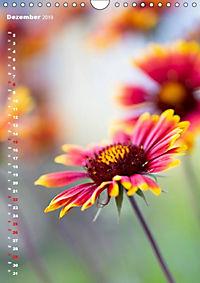 Colors of Nature (Wandkalender 2019 DIN A4 hoch) - Produktdetailbild 12