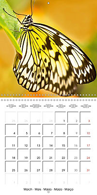 Colourful Butterflies (Wall Calendar 2019 300 × 300 mm Square) - Produktdetailbild 3