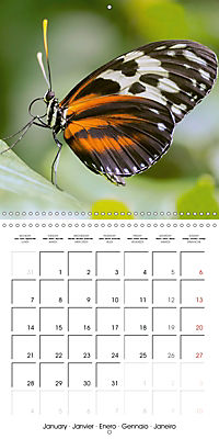Colourful Butterflies (Wall Calendar 2019 300 × 300 mm Square) - Produktdetailbild 1