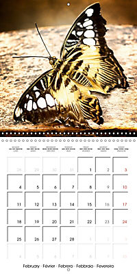Colourful Butterflies (Wall Calendar 2019 300 × 300 mm Square) - Produktdetailbild 2