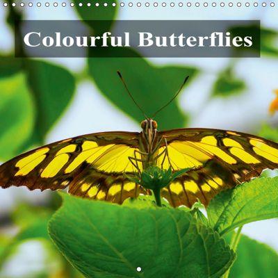 Colourful Butterflies (Wall Calendar 2019 300 × 300 mm Square), Gabriela Wernicke-Marfo