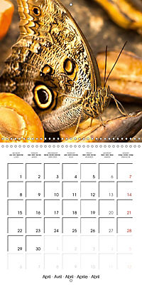 Colourful Butterflies (Wall Calendar 2019 300 × 300 mm Square) - Produktdetailbild 4