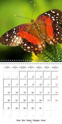 Colourful Butterflies (Wall Calendar 2019 300 × 300 mm Square) - Produktdetailbild 5
