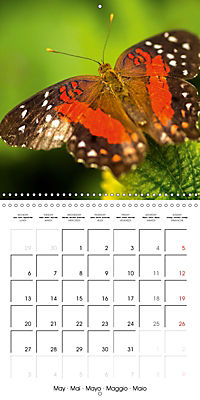 Colourful Butterflies (Wall Calendar 2019 300 × 300 mm Square) - Produktdetailbild 5