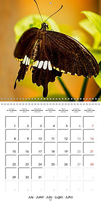 Colourful Butterflies (Wall Calendar 2019 300 × 300 mm Square) - Produktdetailbild 7