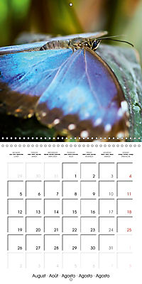 Colourful Butterflies (Wall Calendar 2019 300 × 300 mm Square) - Produktdetailbild 8