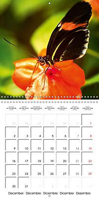Colourful Butterflies (Wall Calendar 2019 300 × 300 mm Square) - Produktdetailbild 12