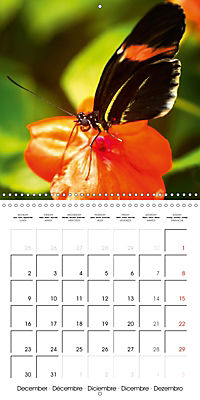 Colourful Butterflies (Wall Calendar 2019 300 × 300 mm Square) - Produktdetailbild 12