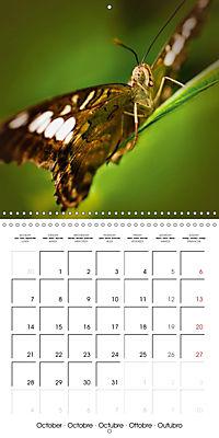 Colourful Butterflies (Wall Calendar 2019 300 × 300 mm Square) - Produktdetailbild 10