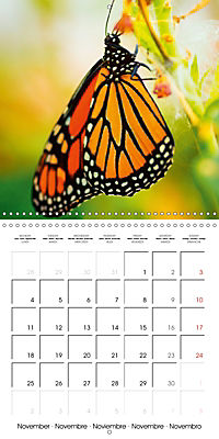 Colourful Butterflies (Wall Calendar 2019 300 × 300 mm Square) - Produktdetailbild 11