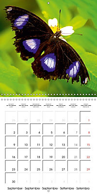 Colourful Butterflies (Wall Calendar 2019 300 × 300 mm Square) - Produktdetailbild 9