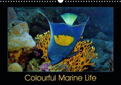 Colourful Marine Life (Wall Calendar 2019 DIN A3 Landscape), Ute Niemann