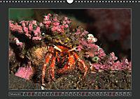 Colourful Marine Life (Wall Calendar 2019 DIN A3 Landscape) - Produktdetailbild 2
