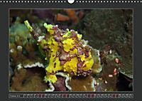 Colourful Marine Life (Wall Calendar 2019 DIN A3 Landscape) - Produktdetailbild 10