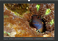 Colourful Marine Life (Wall Calendar 2019 DIN A3 Landscape) - Produktdetailbild 8