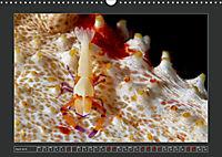 Colourful Marine Life (Wall Calendar 2019 DIN A3 Landscape) - Produktdetailbild 4
