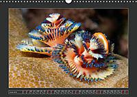 Colourful Marine Life (Wall Calendar 2019 DIN A3 Landscape) - Produktdetailbild 6