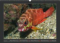 Colourful Marine Life (Wall Calendar 2019 DIN A3 Landscape) - Produktdetailbild 7
