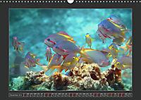 Colourful Marine Life (Wall Calendar 2019 DIN A3 Landscape) - Produktdetailbild 12
