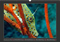 Colourful Marine Life (Wall Calendar 2019 DIN A3 Landscape) - Produktdetailbild 11