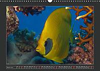Colourful Marine Life (Wall Calendar 2019 DIN A3 Landscape) - Produktdetailbild 3
