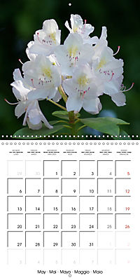 Colourful Rhododendron (Wall Calendar 2019 300 × 300 mm Square) - Produktdetailbild 5