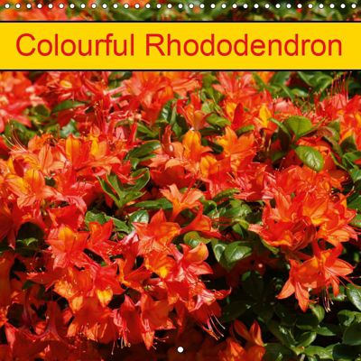 Colourful Rhododendron (Wall Calendar 2019 300 × 300 mm Square), k.A. Kattobello